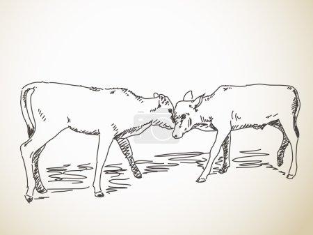 Sketch of butting calfs
