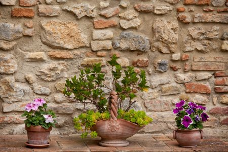 old wall with beautiful flowers