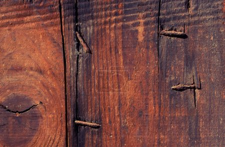 Photo for Close up of a wood texture with details - Royalty Free Image