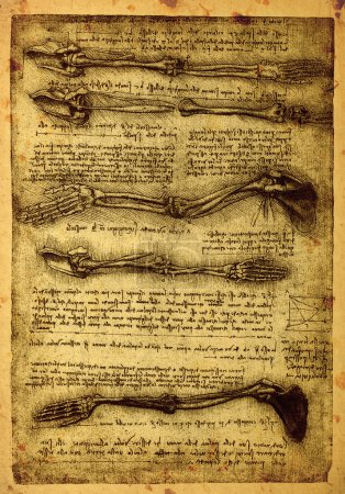 Old anatomy drawings