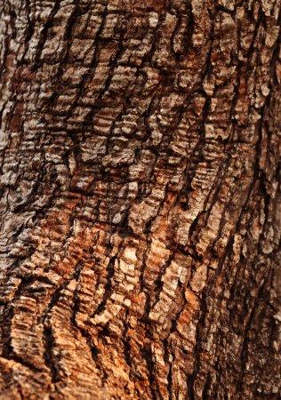 Photo pour Gros plan sur la texture d'un tronc d'arbre - image libre de droit