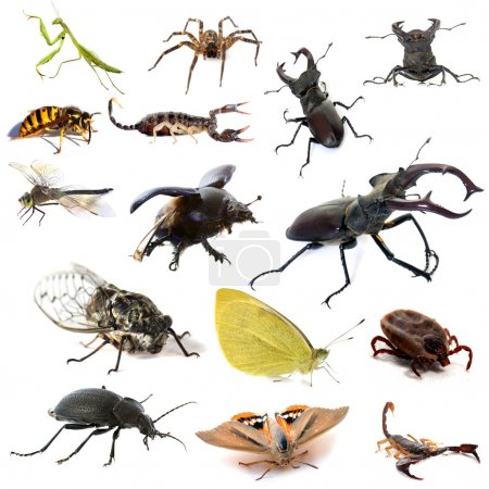 insects and scorpions