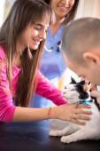 Girl calm down her sick cat in veterinary clinic