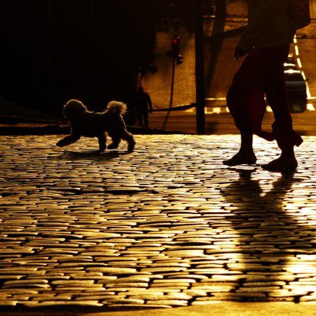 Photo for Lady with a dog crossing the road walking down the street - Royalty Free Image