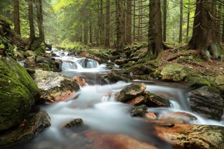Photo for Forest stream in the valley flowing from the mountains. - Royalty Free Image