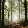 Forest trail surrounded by fog in the sunshine....