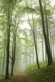 Spring forest in the fog