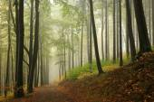 Autumnal forest surrounded by fog