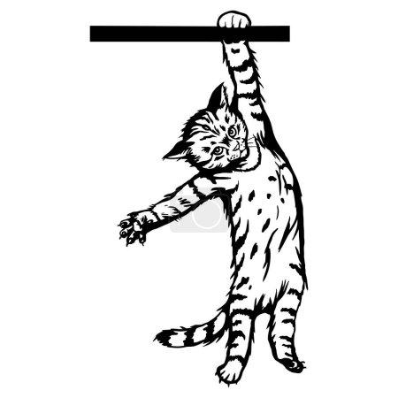 Illustration pour Chat, chaton Peeking - Chaton joyeux isolé sur blanc - illustration vectorielle de stock - image libre de droit