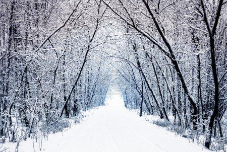 Photo pour Allée de forêt d'hiver avec arbres - image libre de droit