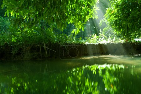 view of nice green water  pond  in tropic environment
