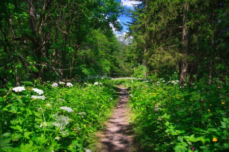 Path in the forset