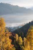 Autumn Landscape with birch forest