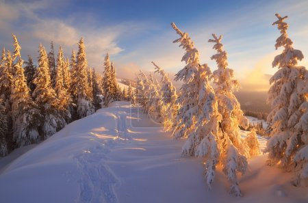 Fir trees under the snow. Mountain forest in winte...