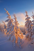 Winter forest in the morning