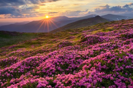Fields of flowers in the mountains