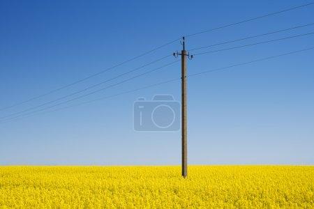 Photo pour Poteau électrique sur le terrain. Viol en fleurs par une journée ensoleillée - image libre de droit