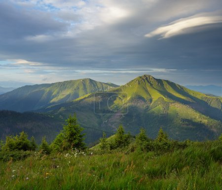 Photo for Fir forest on the slope. Mountain landscape in the summer. The sky with beautiful clouds. View of the Romanian mountains with Ukrainian side - Royalty Free Image