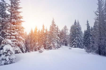 Snowdrifts in a winter forest