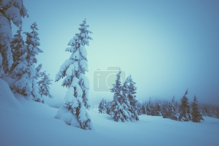Christmas landscape in the forest
