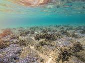 sea bottom in Greece