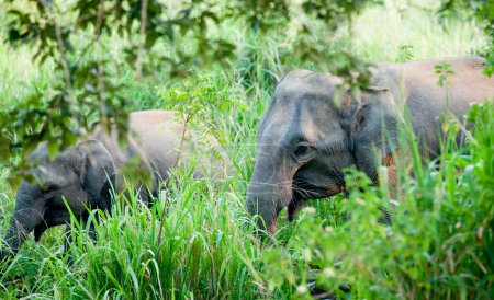 Two elephants in a jungle