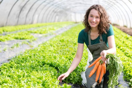 Young attractive farmer harvesting carrots