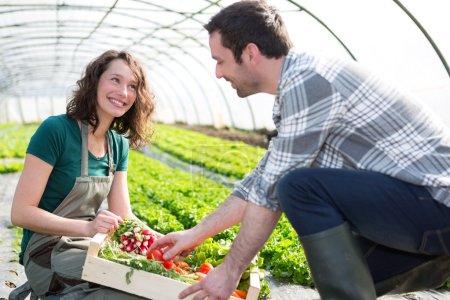 Farmer teaching new employee to gardening