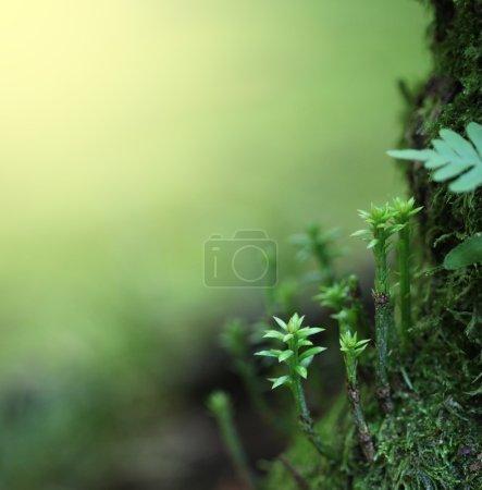 Photo pour Fond nature printemps - image libre de droit