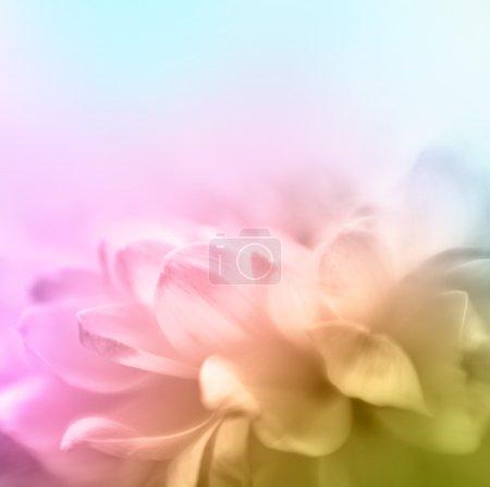 Photo pour Fond doux de fleur de mise au point avec l'espace de copie. Fabriqué wth lensbaby et macrolens . - image libre de droit