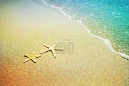 Photo pour Étoile de mer sur une plage de sable - image libre de droit
