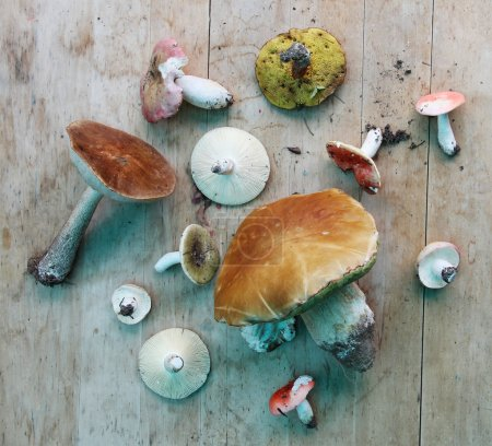Set of different type of mushrooms on wood worktop, top view