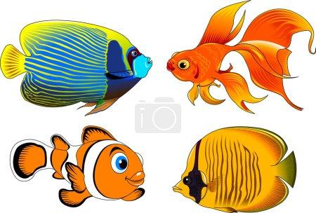 beautiful fish icons set