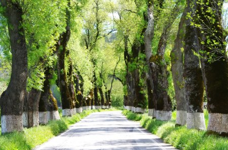 Green tunel forest clean road in the Alentejo,Portugal