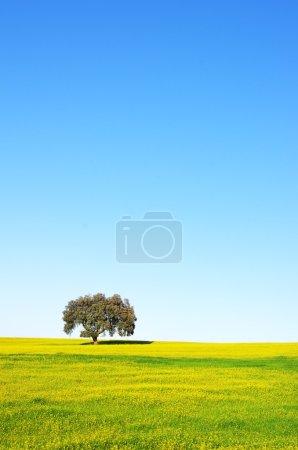 Photo pour Arbre en champ jaune au Portugal - image libre de droit