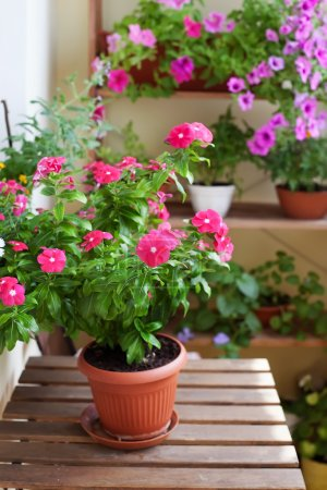 Beautiful balcony with small table and flowers, close-up.