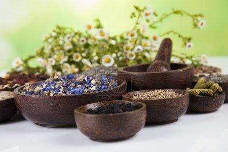 Photo pour Assortiment d'herbes médicinales naturelles sur table en bois - image libre de droit