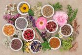 Květiny a byliny