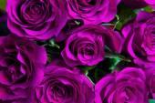 """Постер, картина, фотообои """"Фиолетовый природных розы фон"""""""
