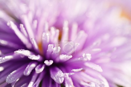 Photo for Abstract macro shot of lilac flower with water drops, selective focus - Royalty Free Image