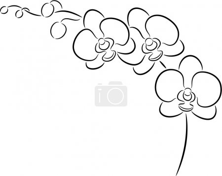 Illustration for Illustration of a orchid flower, isolated. - Royalty Free Image