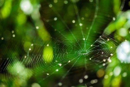 Closeup of a spider web