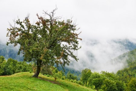 Photo pour Paysage avec les nuages et la brume sur les collines couvertes de forêts dans les montagnes roumaines - image libre de droit