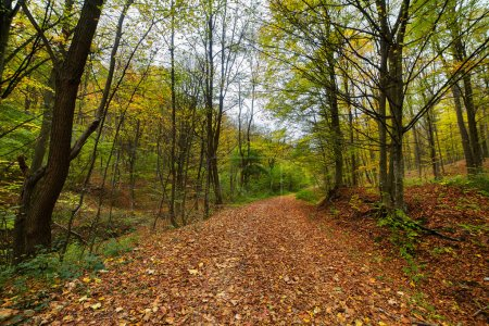Deciduous forest with fallen leaves