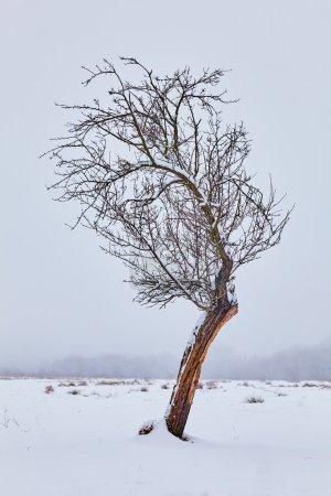 Photo pour Paysage d'hiver avec un arbre vieux et solitaire sur champ neigeux - image libre de droit