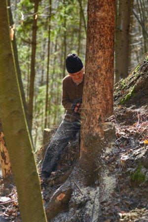 Photo pour Homme caucasien senior bûcheron couper des arbres avec tronçonneuse - image libre de droit