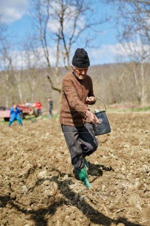 Senior man spreading fertilizer on potato