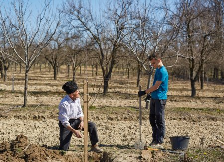Photo pour Fermier senior enseignant à son petit-fils comment planter un arbre dans un verger - image libre de droit