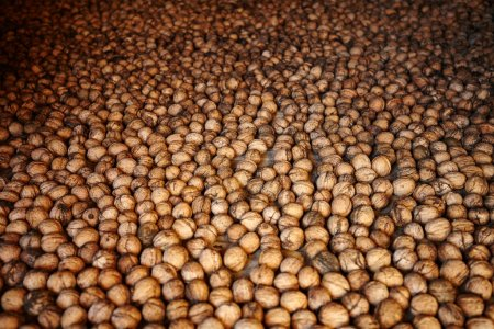 Photo for Closeup of a pile of walnuts arranged for drying - Royalty Free Image