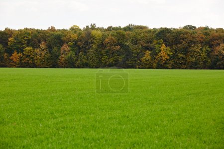 field and colorful forest